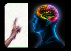 cerebro-300x214-2147913